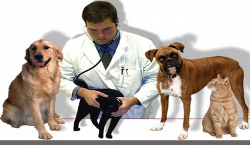 المستشفيات البيطريه لعلاج الحيوانات
